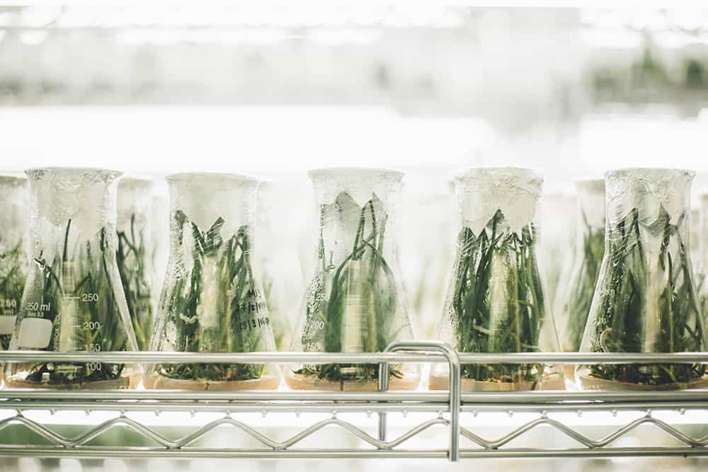 When (and how) Do Companies Perform Drug Tests for Applicants and Employees